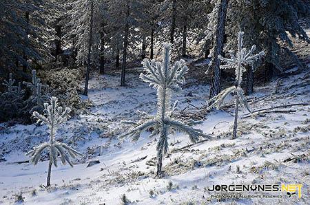 santo-antonio-da-neve-joshua-tree